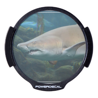 Scary Great White Shark LED Window Decal