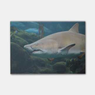 Scary Great White Shark Post-it Notes