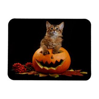 Scary Halloween Pumpkin And Somali Kitten Magnet