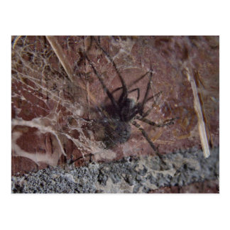 Scary Halloween Spider Post Card