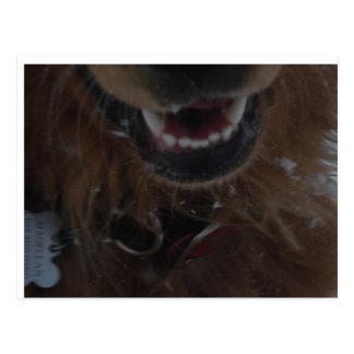 Scary Magellan Teeth Postcard