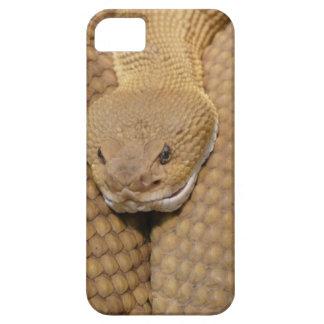 Scary Rattlesnake Photo iPhone 5 Case