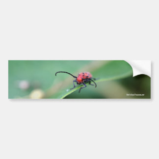 Scary Red Spotted Bug Nature Photo Bumper Sticker