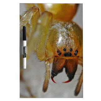 Scary Spider Dry Erase Board