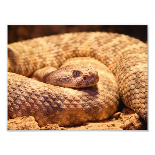 Scary Spotted Rattlesnake Photo Print