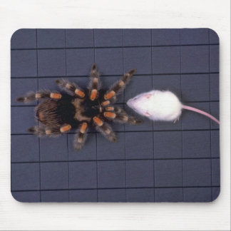 Scary Tarantula spider and white mouse Mouse Pad