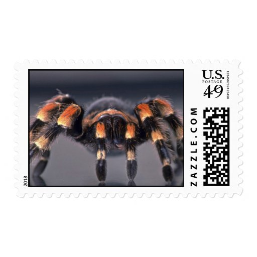 Scary Tarantula spider Postage Stamps