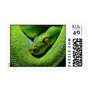 Scary Tree Python Waiting To Attack Postage Stamp