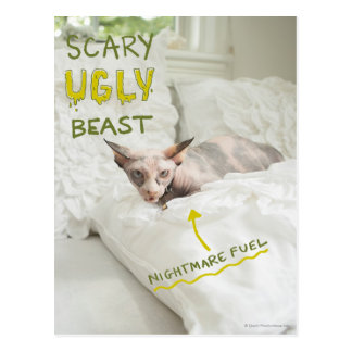 Scary Ugly Cat Postcard