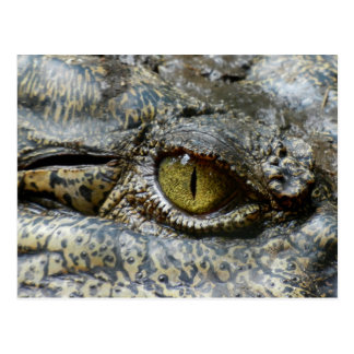 Scary Yellow Eye of Crocodile Postcard