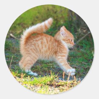 Scarycat Classic Round Sticker