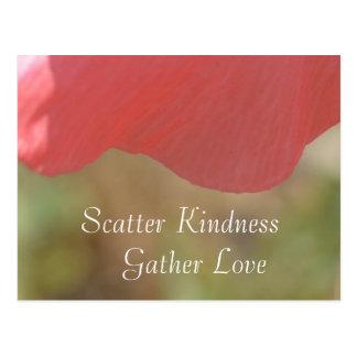 Scatter Kindness Pink Poppy Flower Postcard