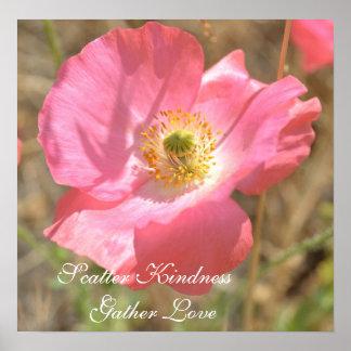 Scatter Kindness Pink Poppy Flower Poster