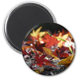 Scattered Fall Leaves 2 Inch Round Magnet