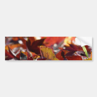 Scattered Fall Leaves Bumper Sticker