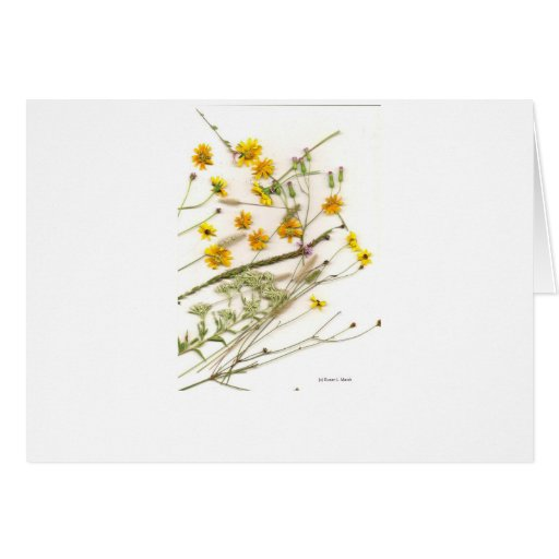 Scattered yellow wildflowers from Florida Cards