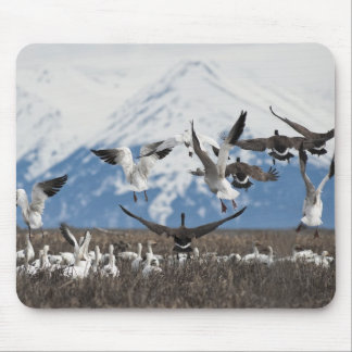 Scattering Geese Mouse Pad