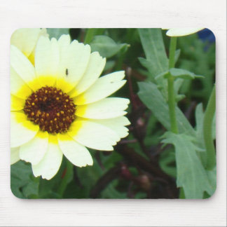 Scattering of Daisies Mouse Pad