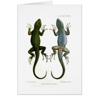 Sceloporus asper card
