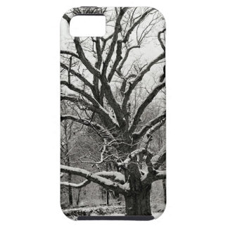Scene Bedford Oak New York iPhone 5 Case