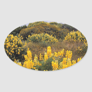 Scene Butter Lupine State Reserve California Oval Stickers