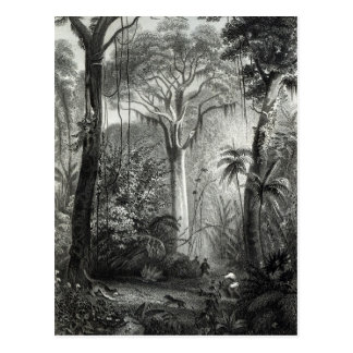 Scene in a Brazilian Forest engraved by Postcard