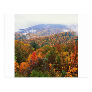 Scene Lush Landscape Appalachian Carolina Postcard