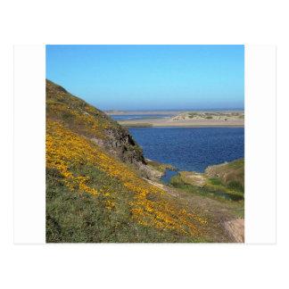 Scene Point Reyes Seashore California Post Cards
