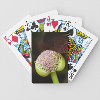 scene pristine bicycle playing cards