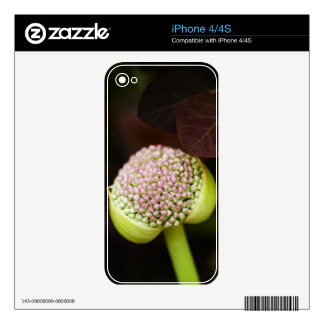 scene pristine decal for the iPhone 4S