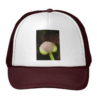 scene pristine trucker hat