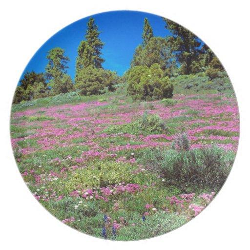 Scene Springtime Sierra Foothills California Plate