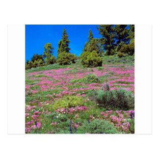 Scene Springtime Sierra Foothills California Postcard