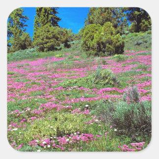 Scene Springtime Sierra Foothills California Square Sticker