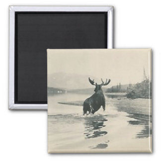 scenery with moose magnet