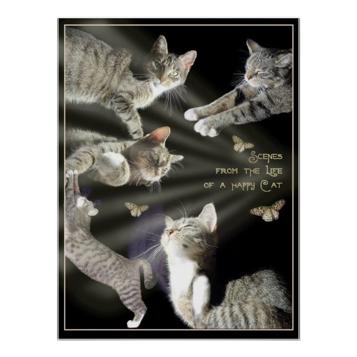 Scenes from the Life of a Happy Cat Poster