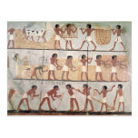 Scenes of sowing from the Tomb of Unsou Postcard