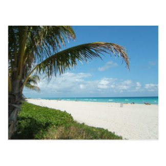 Scenic Beach, Side Palm Branch Postcard