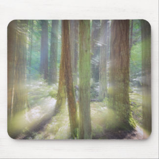 Scenic Beach State Park Mouse Pad