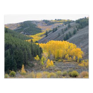 Scenic Colorado Mountain Views Photo Print