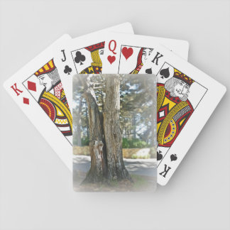 Scenic image of two trees grown together playing cards