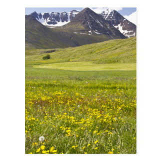 Scenic landscape of Svarfadardalur valley Postcard