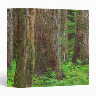 Scenic of old growth forest 3 ring binder