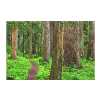 Scenic of old growth forest gallery wrapped canvas