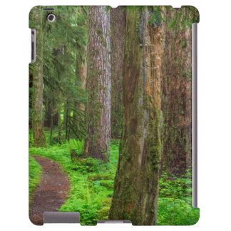 Scenic of old growth forest