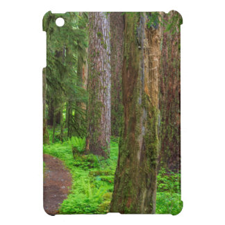 Scenic of old growth forest iPad mini covers