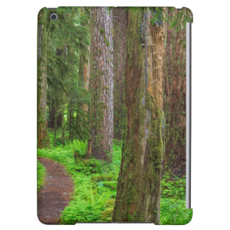 Scenic of old growth forest cover for iPad air