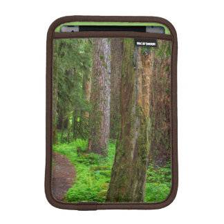 Scenic of old growth forest sleeve for iPad mini