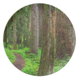 Scenic of old growth forest melamine plate