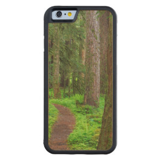 Scenic of old growth forest carved® maple iPhone 6 bumper